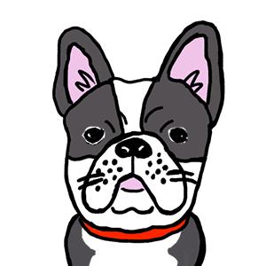 ポイ活犬 ブルちゃん